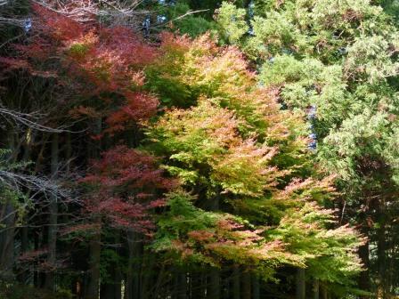 滑川渓谷の紅葉 1