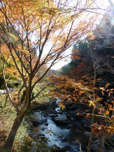 滑川渓谷へ行く途中の紅葉 1