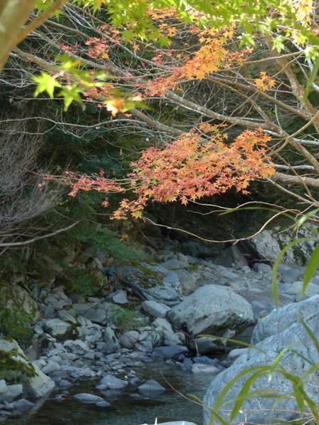 滑川渓谷へ行く途中の紅葉 2