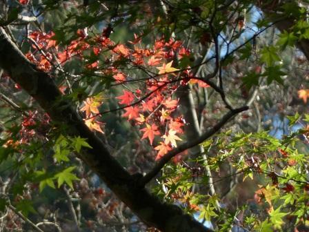 稲荷山公園の紅葉・黄葉 1