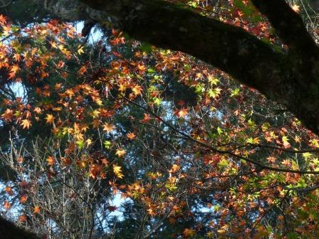 稲荷山公園の紅葉・黄葉 2