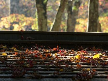稲荷山公園の紅葉・黄葉 4