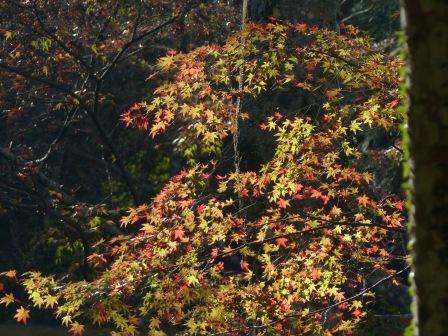 稲荷山公園の紅葉・黄葉 3