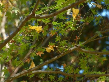 稲荷山公園の紅葉・黄葉 8