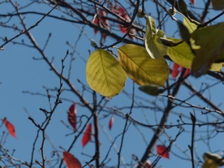 松山総合公園 紅葉・黄葉 1