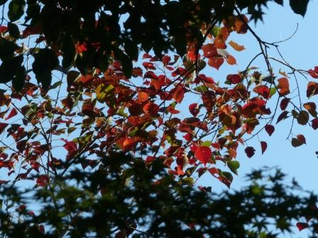 松山総合公園 紅葉・黄葉 6