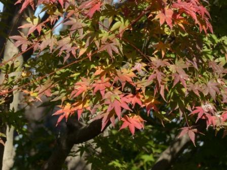 松山総合公園 紅葉・黄葉 7