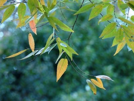 松山総合公園 紅葉・黄葉 9