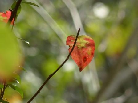 白鷺湖畔 紅葉