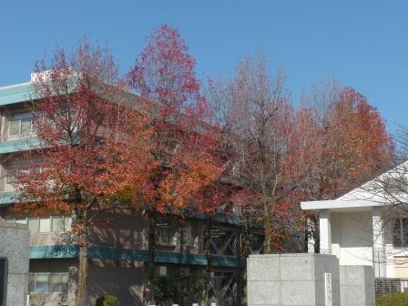 愛媛大学 紅葉 1