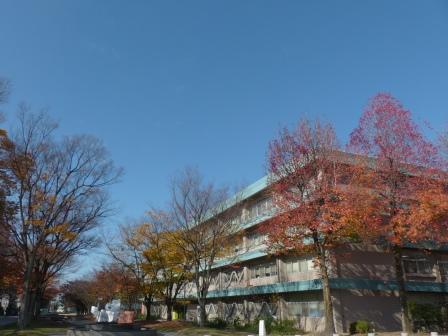 愛媛大学 紅葉 2