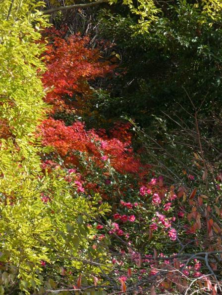 道後公園 紅葉・黄葉 2