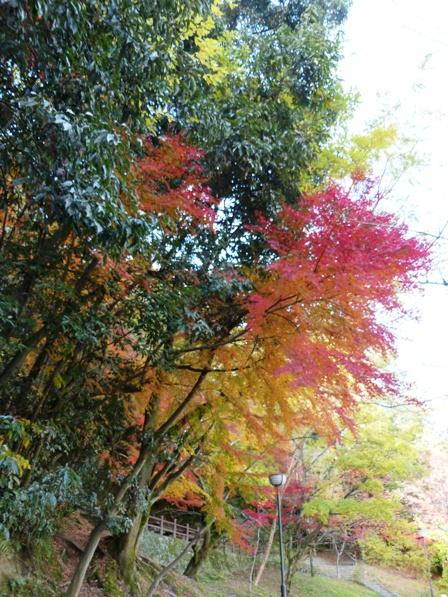 道後公園 紅葉・黄葉 4