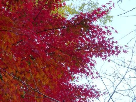 道後公園 紅葉・黄葉 5