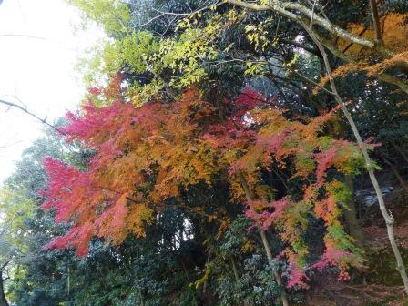 道後公園 紅葉・黄葉 8