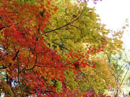 道後公園 紅葉・黄葉 10