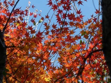 道後公園 紅葉・黄葉 11