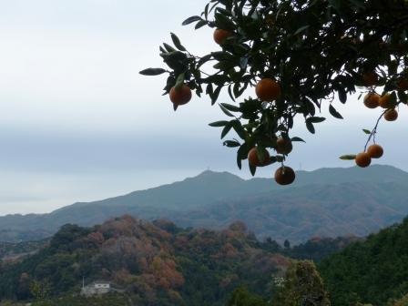 宅並山からの眺め 10