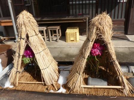 井内牡丹園 (ぼたん茶屋) 冬牡丹 1