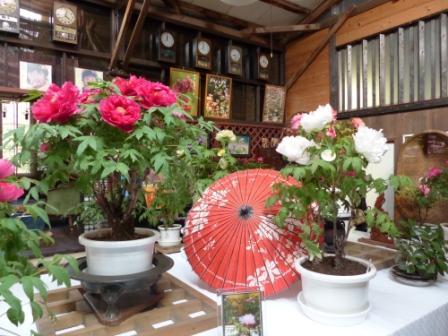 ぼたん茶屋 冬牡丹 1