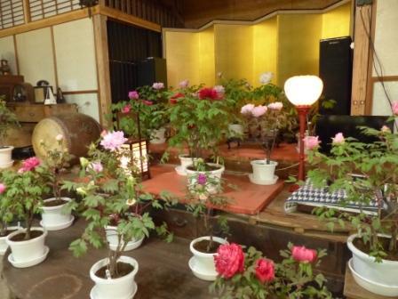 ぼたん茶屋 冬牡丹 2
