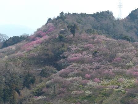 七折梅園 14
