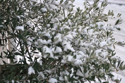 IMG_0003 雪の