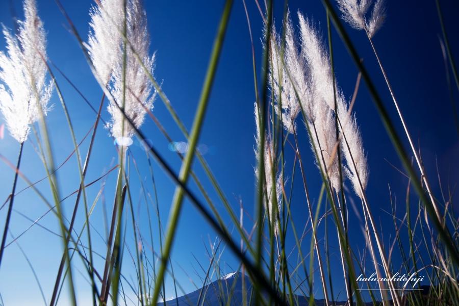 パンパス富士山 N_fS