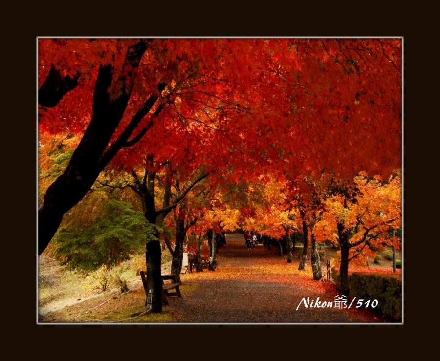紅い回廊 _fssp