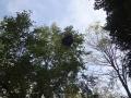 木の上の傘