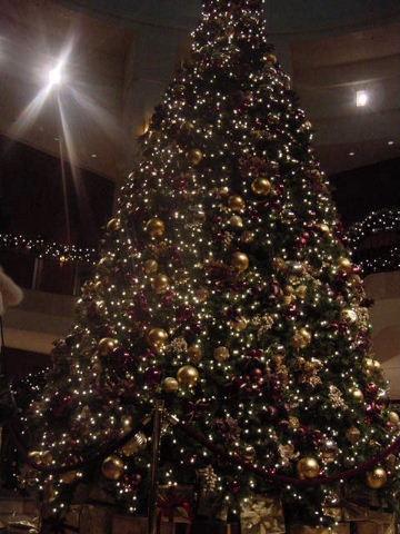 クリスマスツリー)・雌