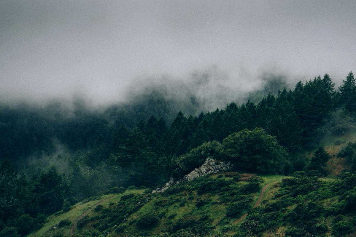 foggy_morning_forrrest_image
