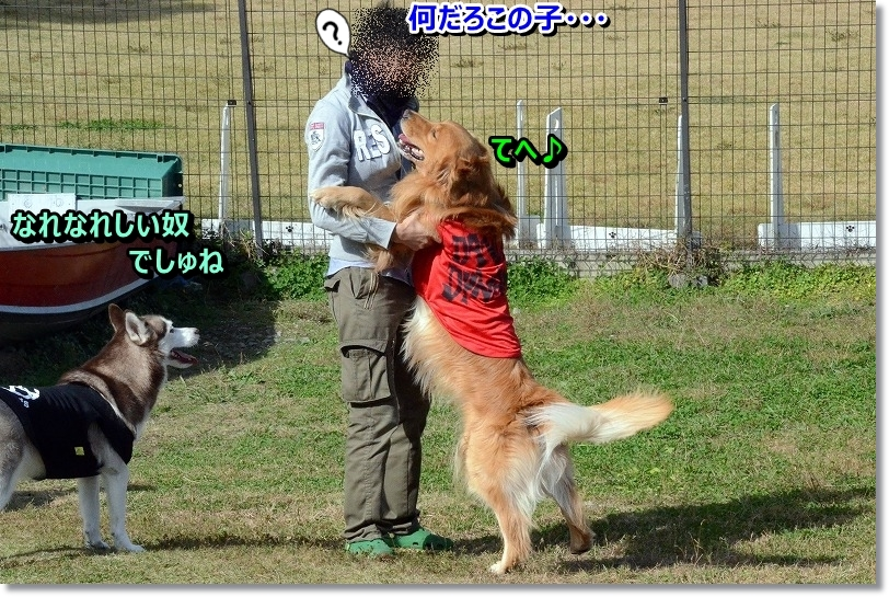 DSC_0115_2015112917223484f.jpg