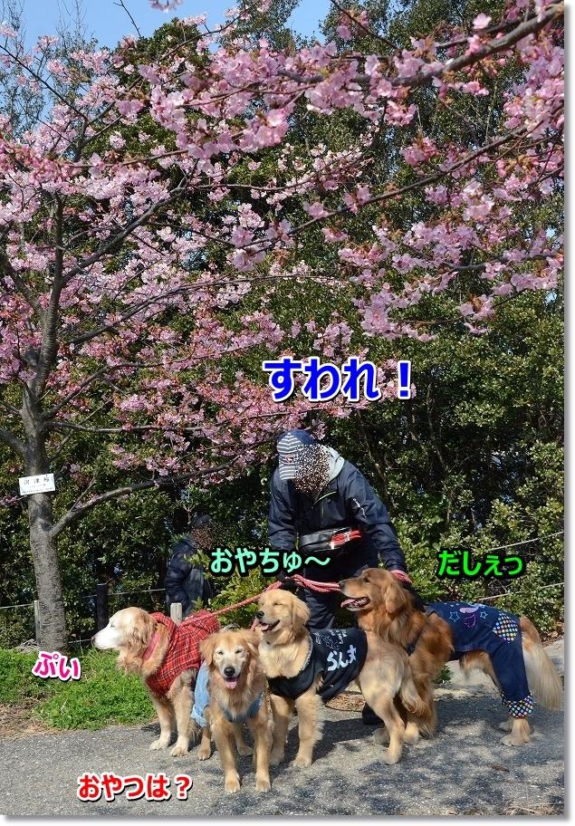 DSC_0317_2016030320371355f.jpg