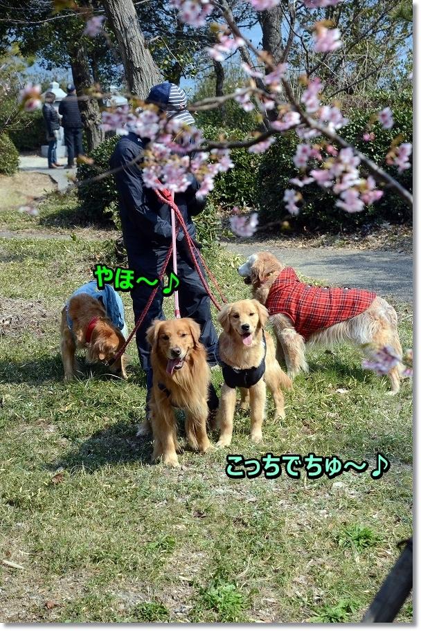 DSC_0348_201603032037388d6.jpg
