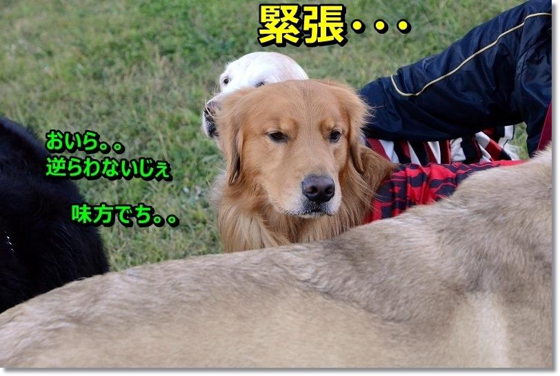 DSC_0402_2015120320530538d.jpg