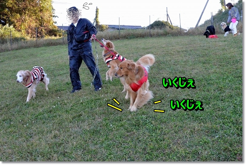 DSC_0437_20151203205425e25.jpg