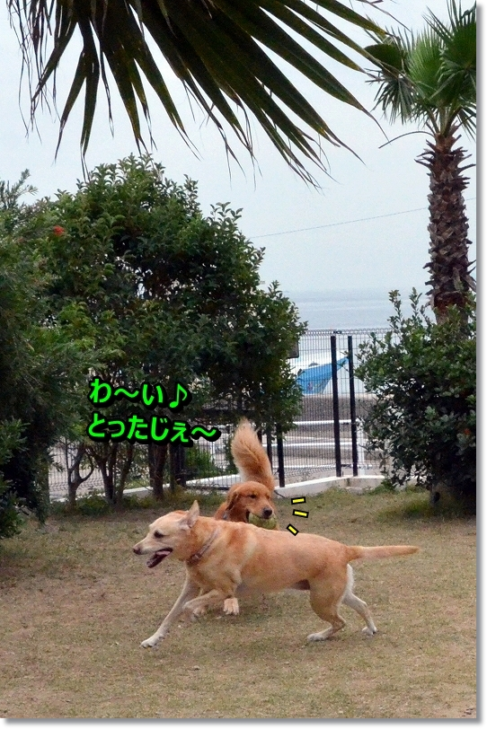 DSC_0463_20151205093932849.jpg