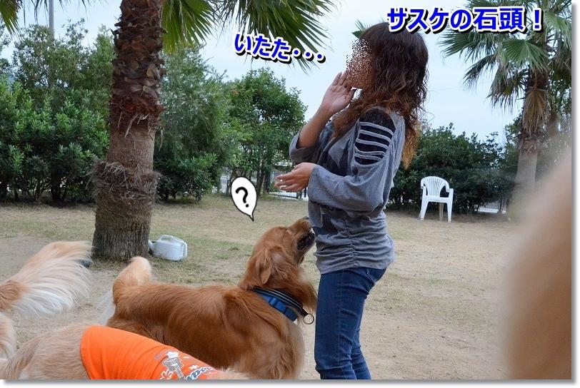 DSC_0517_201512092332572af.jpg
