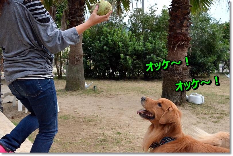 DSC_0521_20151205094006abb.jpg