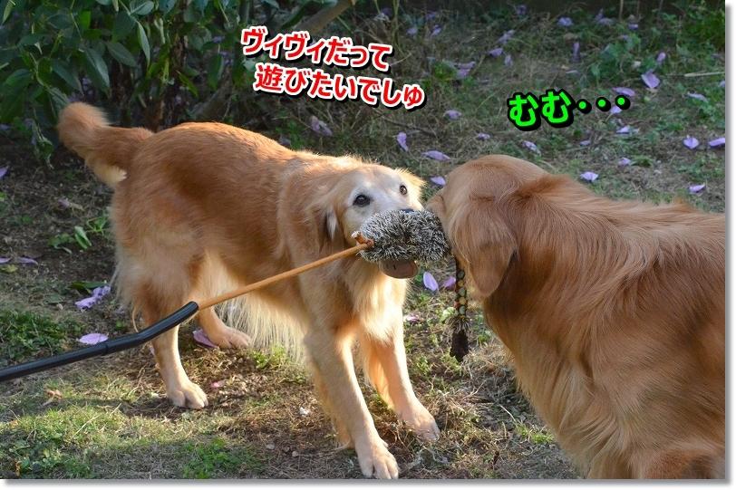 DSC_0591_2015120619295921f.jpg