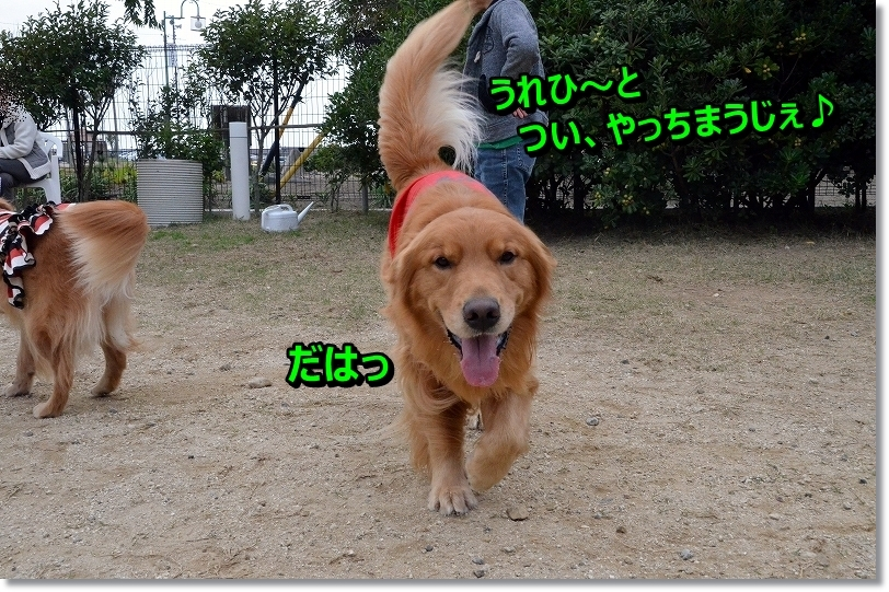 DSC_0649_20151211095113714.jpg