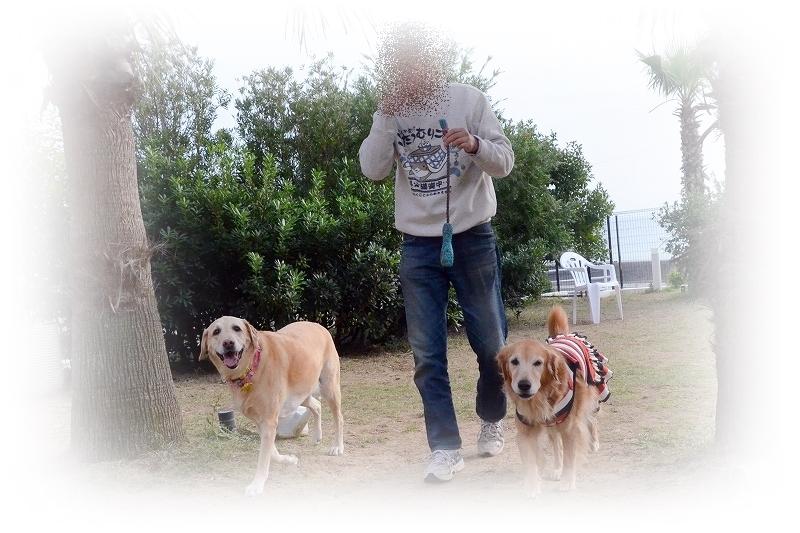 DSC_0680_2015121120524214b.jpg
