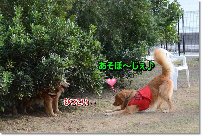 DSC_0699_20151211205303b93.jpg