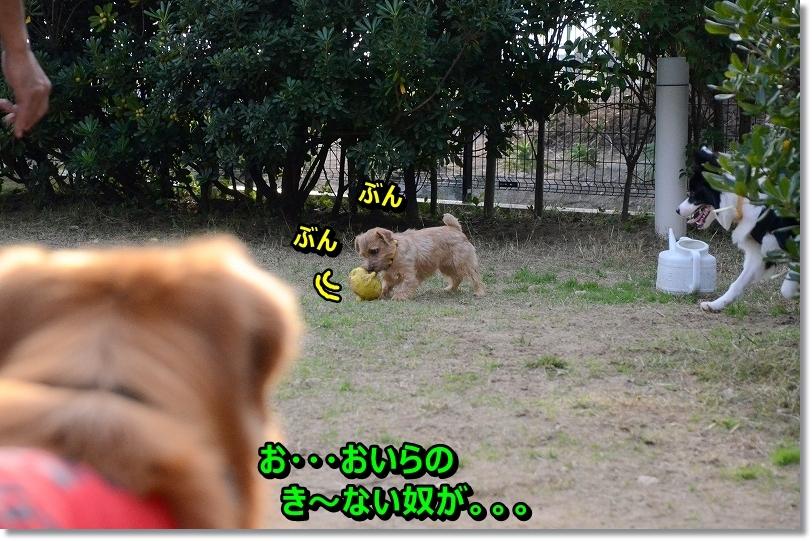 DSC_0726_20151213202249df5.jpg