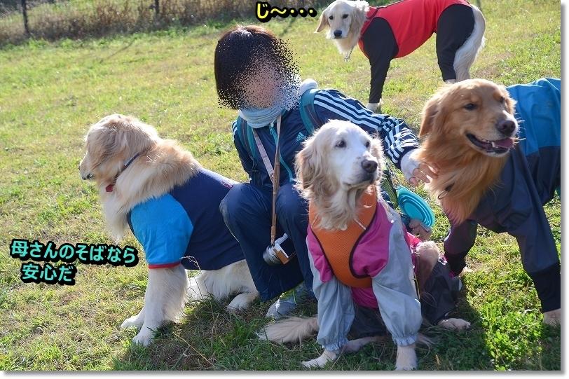DSC_0847_20151218203949916.jpg