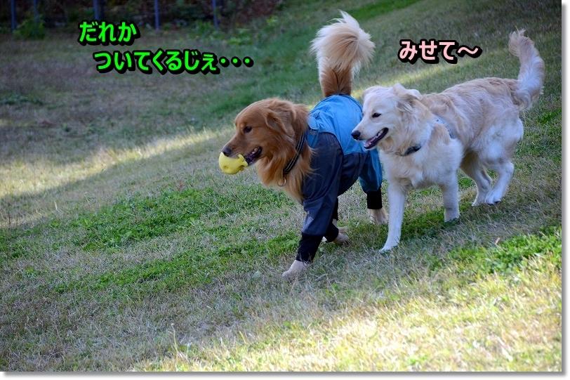 DSC_0882_201512192331296e1.jpg