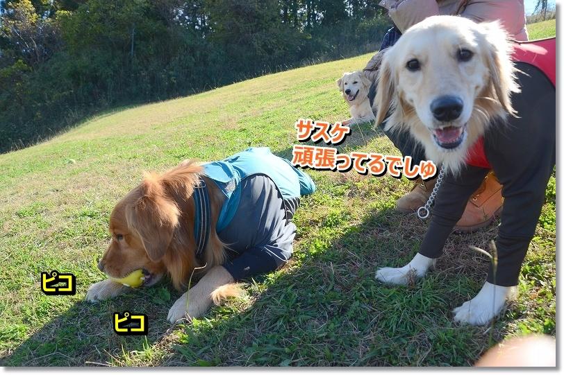DSC_0913_2015121923314848a.jpg