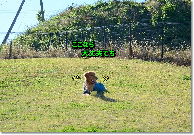 DSC_0916_20151219233202169.jpg