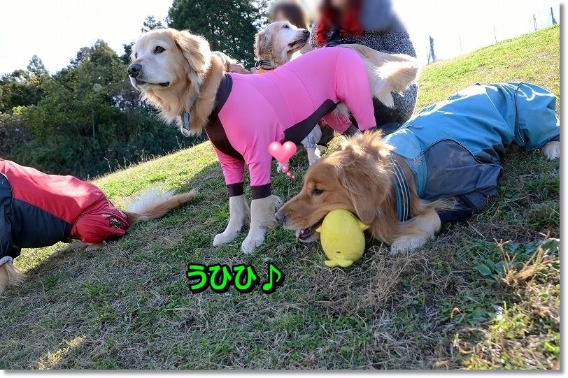 DSC_0924_20151219233217696.jpg